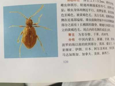 紹興檢驗檢疫局 國內首次截獲該生物