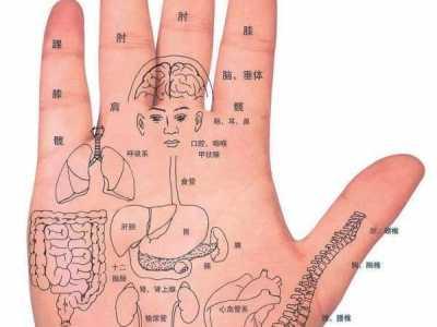 胳膊穴位图 人体穴位一胳膊手部手的反射区图